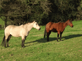 Two Brood Mares