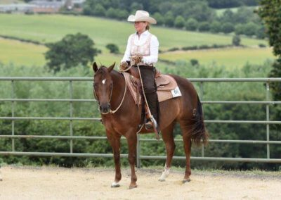 Riding mare for sale