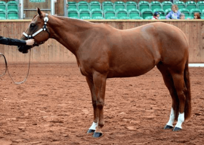 2012 mare for sale