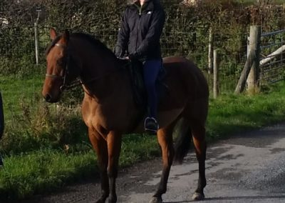 15.2 Part Bred mare